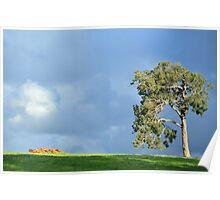 big old gum tree Poster