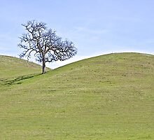 Lone Tree and Rolling Foothills by John Butler