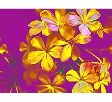 Colours Flowers Photographic Print