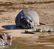 LIVE AND LET LIVE! - Hippopotamus amphibious - SEEKOEI by Magaret Meintjes
