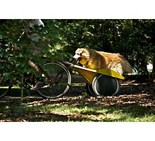 Dog Daze  Photographic Print