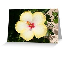 Pale Yellow Hibiscus Flower - Front View Greeting Card