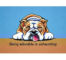Being Adorable Bulldog Blue Photographic Print