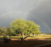 The Rain and The Rainbow by Lucinda Walter