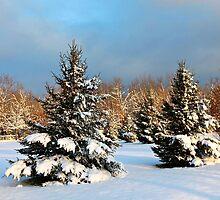 Snowy morning wonderland by idbwhou