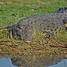 Crocodile,Mary River, NT  by waxyfrog