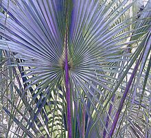 Hontoon Palm by triplelll