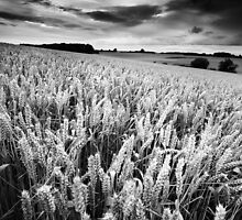 Harvest Whisper BW by Andy F