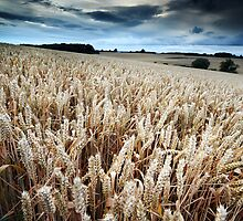 Harvest Whisper by Andy Freer