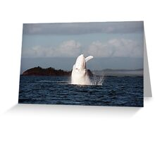 The Big White Whale Greeting Card