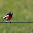 Bird on a Wire by John Sharp