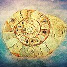 The Shell - Fibonacci (The Golden Spiral) in Nature by Denis Marsili - DDTK