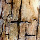 Patterns in splitting old bark. by ronsphotos