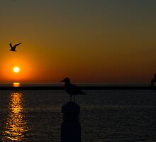 Seagull Sunrise by James Meyer