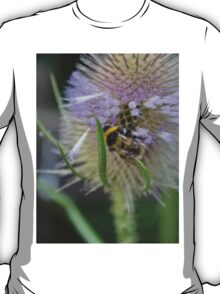 Bumble Bee sitting on a Teasel (Dipsacus) T-Shirt