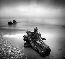 Driftwood washed up on shore by laantonov