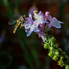 dragon fly  by ConnorTaylor