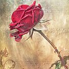 Musical Rose by Beth Mason
