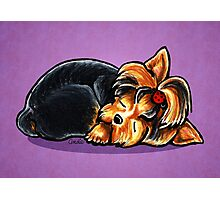 Yorkie Sleeping Babe Photographic Print