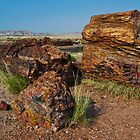 Petrified Forest National Park by DavidHintz