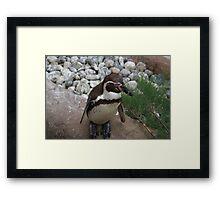 Posing Penguin Framed Print