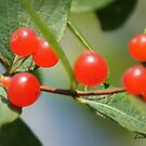 Berry Nice by Lorelle Gromus