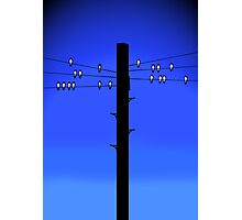 Swallows on a wire Photographic Print