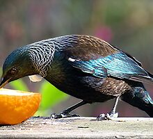 Tui - this is all mine........! by Roy  Massicks