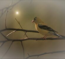 GOLDFINCH IN THE SUNLIGHT by TOM YORK