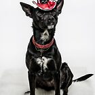 Cattle Dog Couture by Bobby Acree