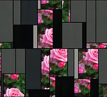Pink Roses in Anzures 1 Art Rectangles 7 by Christopher Johnson