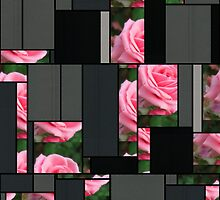 Pink Roses in Anzures 2 Art Rectangles 7 by Christopher Johnson