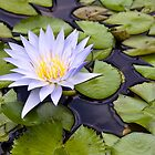 Water Lily by Michael Atkins