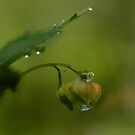 Shaking off the morning dew by BiggerPicture