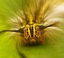 caterpillar by davvi