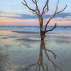The Lonesome Tree Of Botany Bay SC by JHRphotoART