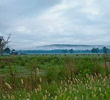Cattle Farm in Early Morning Mist by Lisa G. Putman