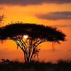 Safari Sunrise  by Pippa Carvell