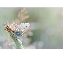 Sunbathing butterfly... (Blue version) Photographic Print