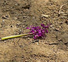 Early Purple Orchid Destruction by Sue Robinson