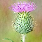 Textured Spear Thistle by M.S. Photography & Art
