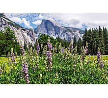Wildflowers in Cook's Meadow, Yosemite Valley, California, USA Photographic Print
