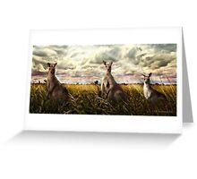3 kangaroos Greeting Card