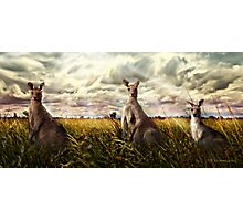 3 kangaroos Photographic Print