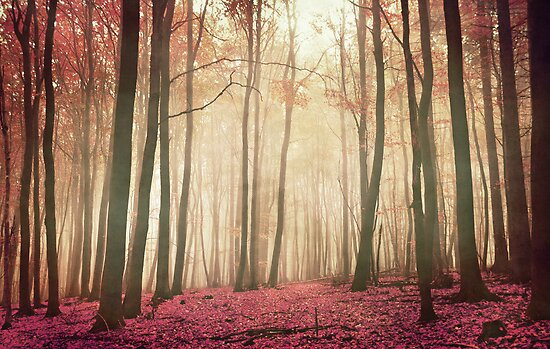 red woods by Iris Lehnhardt