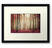 red woods Framed Print