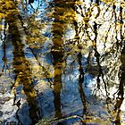 Woodland Reflections by SRowe Art