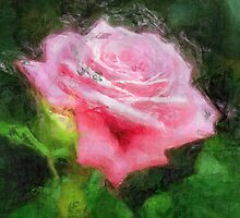 Pink Roses in Anzures 3 Sketchy by Christopher Johnson