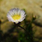 Purple Flower Bokeh by Katya laRoche