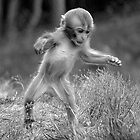 Funky monkey by Gervlove